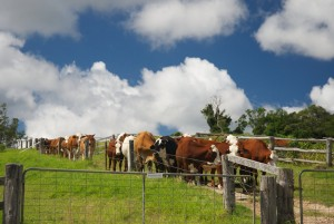 The Australian Dairy Industry releases its second sustainability progress report
